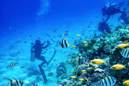 divers swimming underwater near coral reefs