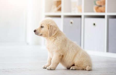 Cute young dog walking in light flat