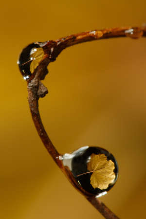 miror: Yellow leaf reflection in droplets