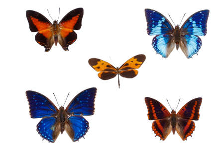 nymphalidae: Collection of  nymphalidae family african butterflies isolated on white