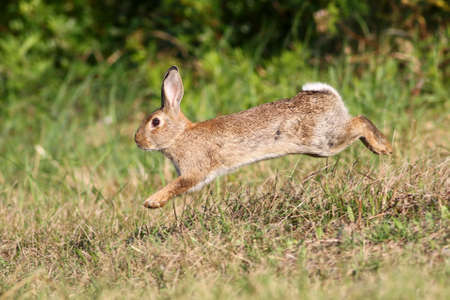 Wild cute rabbit is jumping on meadow