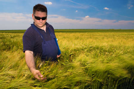 dirtied: Farmer Inspecting  mature grain on the field