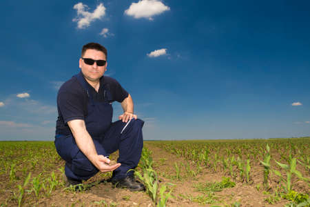 dirtied: Farmer Inspecting Corn field  attacked by weed