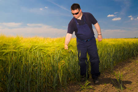 dirtied: Farmer with sunglasses Inspecting  barley on the field Stock Photo
