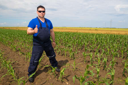 dirtied: Satisfied farmer make  OK sign on the corn field Stock Photo