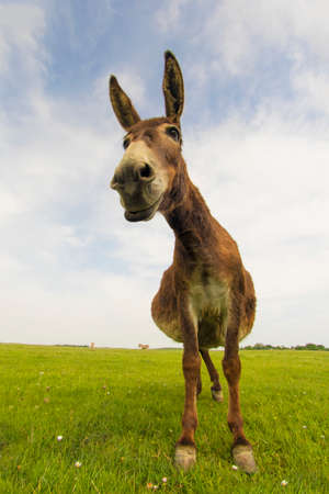 funny donkey: Portrait of funny donkey on the floral meadow Stock Photo