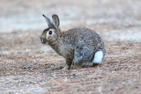 Wild cute rabbit is listening on field Stock Photo