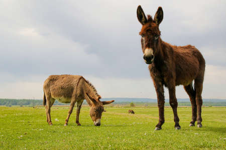 Two curious donkeys on the floral spring  meadow