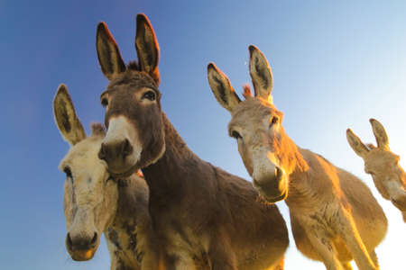 Portrait of four donkeys with funny faces
