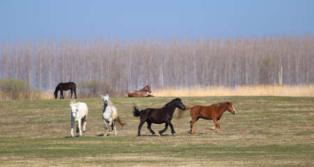 Herd of wild horses on the spring meadow