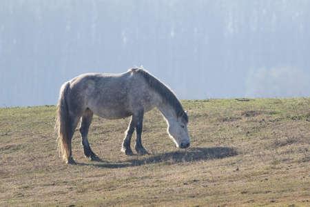 White wild horse graze in the meadow Stock Photo