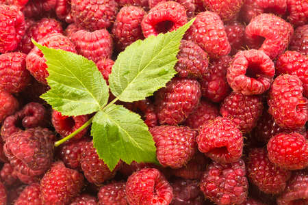 Top view of raw pink raspberries and green leaf after harvest