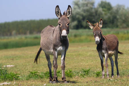 Two curious donkeys on the floral meadow