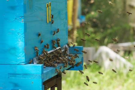 Blue and yellow hive with a swarm of bees