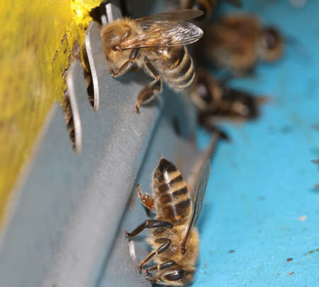 Close up of hive with a honey bees Stock Photo