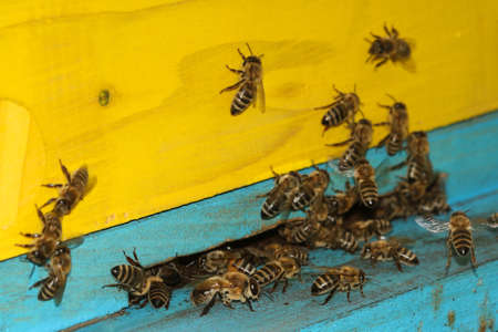 An blue-yellow apiary with a swarm of honey bees Stock Photo
