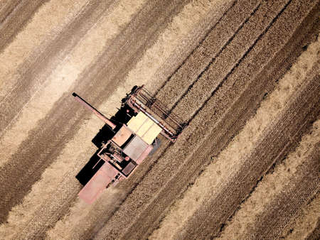 Aerial view of of harvester reaps grain Stock Photo