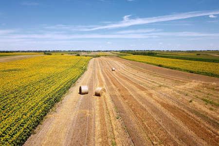 Sunflower field and round hay bales landscape