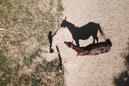 Contact between a girl and a horse, an aerial view with shadows Standard-Bild
