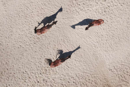 Top view of three horses with shadows