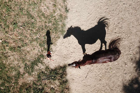 Aerial view  of girl and a horse with shadows