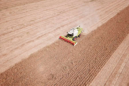 Combine harvesting genetically modified soya bean on the field