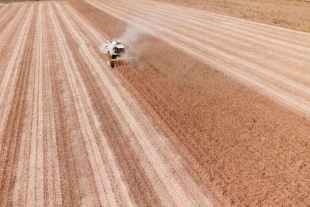 Combine harvesting genetically modified soya bean field