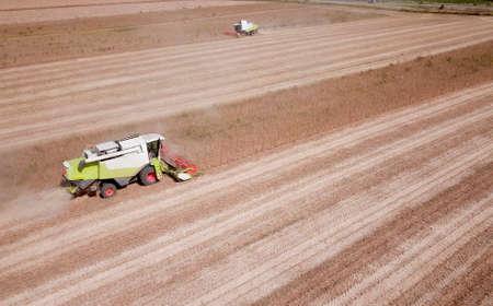 Two combine  harvest a soya bean field