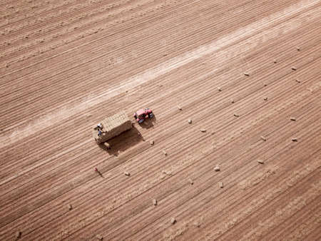 Top view of red Tractor and  workers baling and collecting hay Standard-Bild