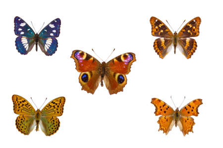 Top view of Collection of nymphalidae butterflies  species on white background
