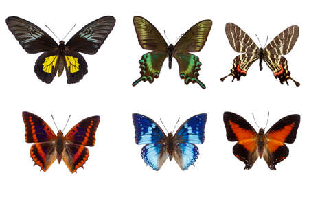Top view of Collection of  colorful tropical butterflies  species on white background