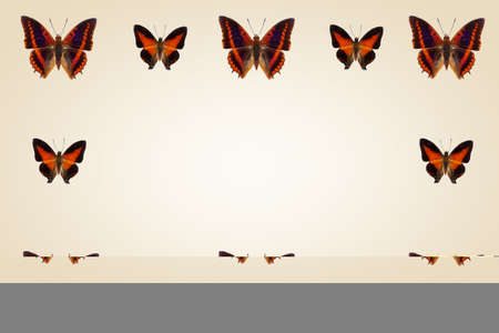 Top view of Collection of  orange  butterflies on set sail champagne background