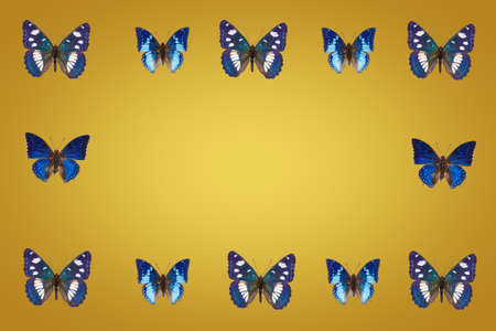 Top view of Collection of  blue  butterflies on fortuna gold background Banque d'images