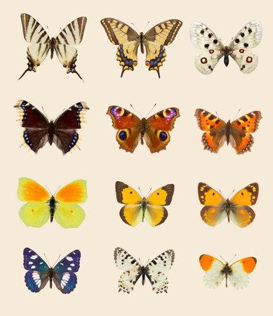 Set of nine European butterflies species on set sail champagne background