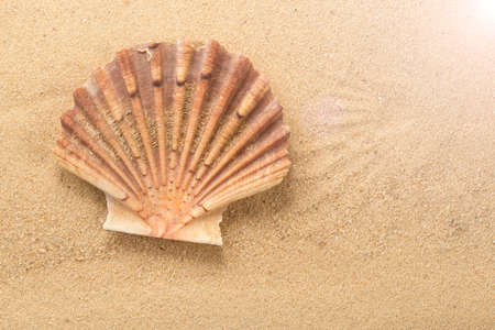 Top view of Mediterranean scallop, Pecten jacobaeus seashell on sand