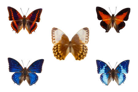 Set of five blue and orange tropical butterflies on white background