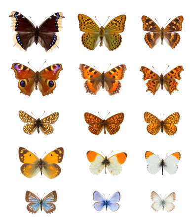 Set of twenty  colourful european butterflies species in white background Banque d'images