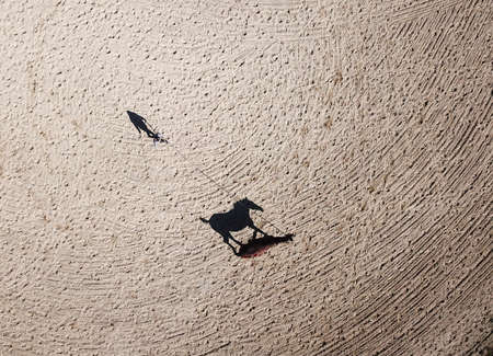 Areal view of girl lunging horse, shadows