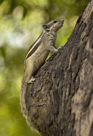 Chipmunk on the tree Stock Photo