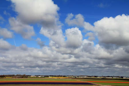 Fields of many colors  and sky in Holland photo