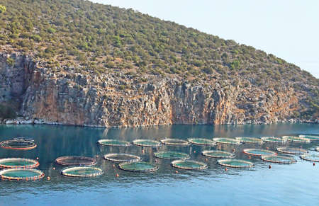 aquaculture: Aquaculture in Greece