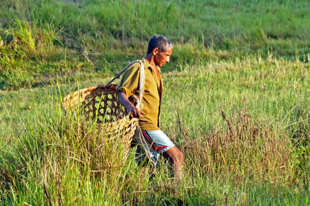 illiterate: Nepalese men carry things in big basket at the traditional way in Chitwan National Park, Nepal. Park was established in 1973 and granted the status of a World Heritage Site in 1984