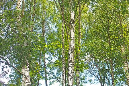 birchwood: Birchwood