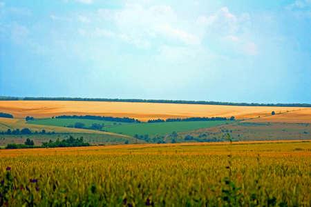 Fields and blue sky. Ukraine Stock Photo