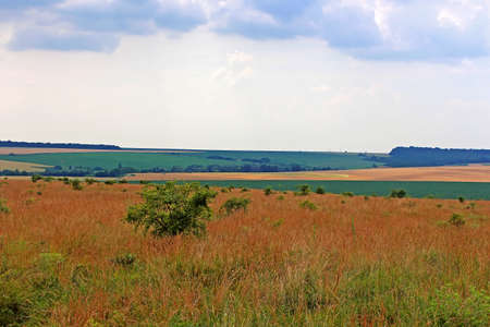 Meadows and fields in the summer, Ukraine Stock Photo
