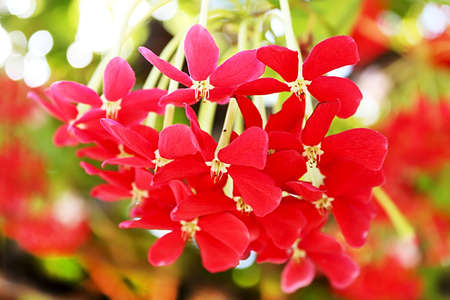 Red flowers in Israel in the autumn