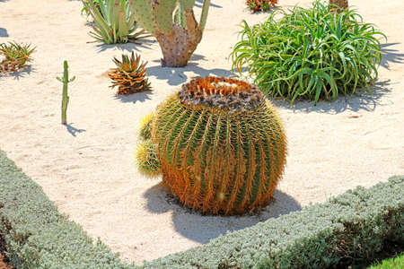 The Bahai Gardens include areas with cactuses, yuccas and agaves, growing in separated plant beds, Israel