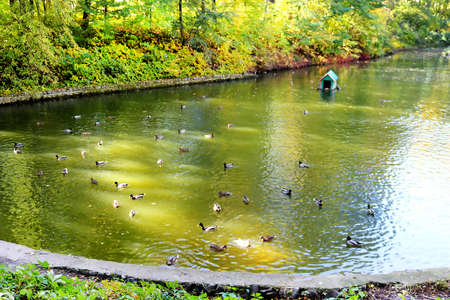 Pond with ducks in autumn park