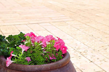 Wine bowl with flowers on the yard of the Cana Greek Orthodox Wedding Church in Cana of Galilee, Kfar Kana, Israel