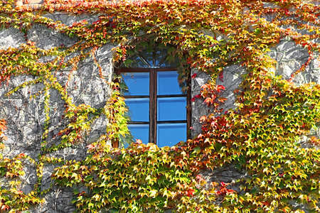 Wall in colored leaves with window. Background texture Фото со стока